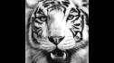 logo de Maquinas y Herramientas Tiger